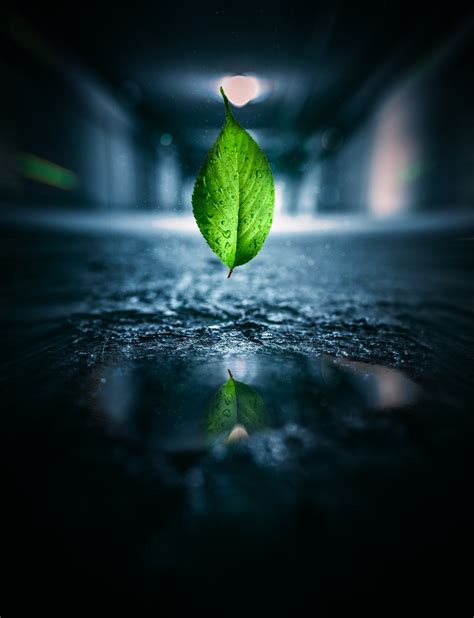 Free Images : leaf, water, green, nature, reflection